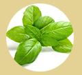Herbs 4 Life